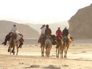 Wüstenbilder
