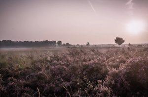 Von der Heide zur Savanne